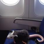 Mr. Opossum