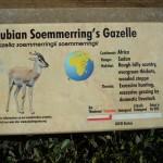 gazelle info