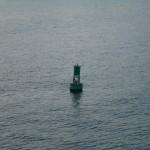bouy with harbor seals